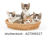 Stock photo group of young kittens in the basket 627340217