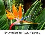 Flower Strelitzia. Bird...