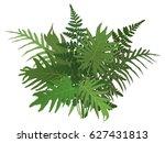 botanical vector illustration ... | Shutterstock .eps vector #627431813