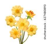 beautiful bouquet of yellow... | Shutterstock . vector #627480893
