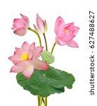 beautiful pink lotus flowers... | Shutterstock . vector #627488627