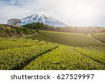 terraced green tea fields with... | Shutterstock . vector #627529997