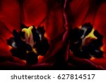 close up of red tulips on black ... | Shutterstock . vector #627814517
