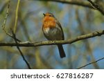 robin in tree | Shutterstock . vector #627816287