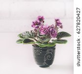 Small photo of African Violet in flower pot, isolated on white. Selective focus