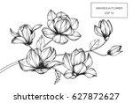 Stock vector magnolia flowers drawing and sketch with line art on white backgrounds 627872627