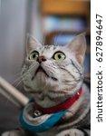 Stock photo cat 627894647