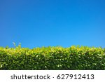 green leaves blue sky... | Shutterstock . vector #627912413