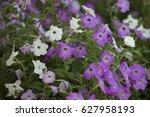 White Flowers And Purple Flowe...