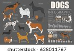 dog info graphic template.... | Shutterstock .eps vector #628011767