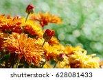 yellow flowers chrysanthemums... | Shutterstock . vector #628081433