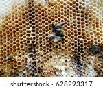 the photo shows beehive honey... | Shutterstock . vector #628293317