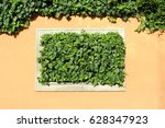 ivy background  wall plant.  | Shutterstock . vector #628347923