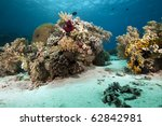coral and ocean | Shutterstock . vector #62842981