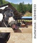 Small photo of Smile donkey