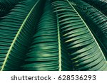 Tropical Palm Leaves Texture...