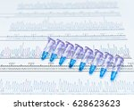 pcr dna sequence analysis by... | Shutterstock . vector #628623623