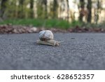 Small photo of The snail Stylommatophora on the path.