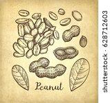 peanut set. ink sketch of nuts. ... | Shutterstock .eps vector #628712603