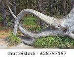 Fallen Tree Root Structure   A...