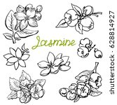set jasmine flowers. hand drawn ... | Shutterstock .eps vector #628814927