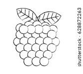 grapes fresh fruit icon | Shutterstock .eps vector #628872263