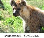 really adorable face of a... | Shutterstock . vector #629139533