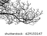 realistic tree silhouette ... | Shutterstock . vector #629153147