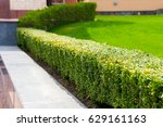 Geometric Bush Landscape Design