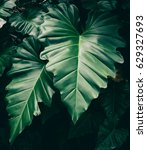 tropical leaves texture... | Shutterstock . vector #629327693