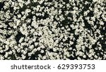 white flowers photography  | Shutterstock . vector #629393753