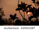 flowers silhouette at sunset  | Shutterstock . vector #629651087