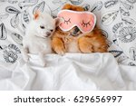 Cute  Funny Red Pomeranian...