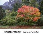 autumn tree in olinda  victoria ...   Shutterstock . vector #629677823