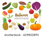 collection of seasonal fruits... | Shutterstock .eps vector #629832893