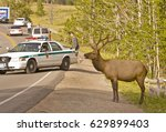 yellowstone national park ... | Shutterstock . vector #629899403
