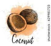 vector illustration  coconut in ... | Shutterstock .eps vector #629981723