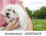 dog and his owner   happy woman ... | Shutterstock . vector #630054623