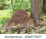 Large Anthill Near A Tree In...