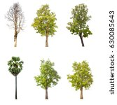 tree isolated tree on white... | Shutterstock . vector #630085643