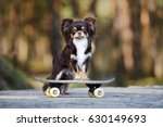 adorable brown chihuahua dog... | Shutterstock . vector #630149693