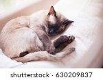 siamese cat sleeping under... | Shutterstock . vector #630209837