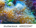 colorful underwater tropical... | Shutterstock . vector #630222347