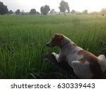 animal | Shutterstock . vector #630339443
