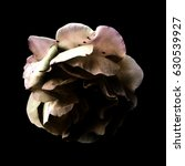 colored rose on black background | Shutterstock . vector #630539927