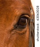Portrait Closeup Of Brown Hors...