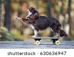 adorable brown chihuahua dog on ... | Shutterstock . vector #630636947
