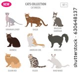 cat breeds icon set flat style... | Shutterstock .eps vector #630648137