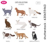 cat breeds icon set flat style... | Shutterstock .eps vector #630655463