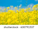 wasp pollinating yellow... | Shutterstock . vector #630791537